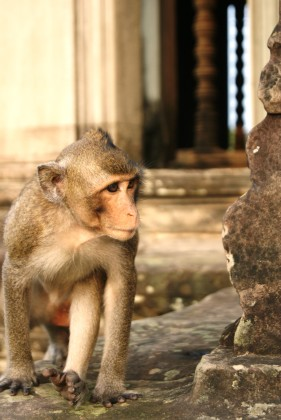 A curious local of Angkor Wat